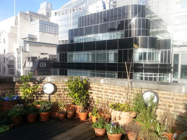 roof garden mdr 2